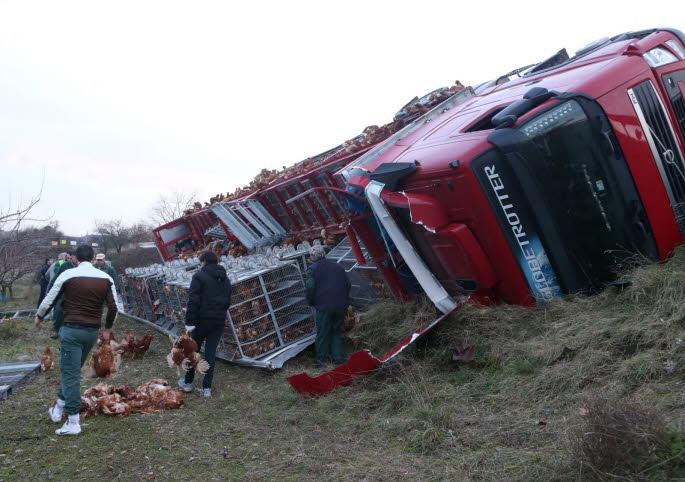 MERCUROL (DRÔME )/ Sortie de route pour un camion transportant des volailles : des milliers d'animaux tués