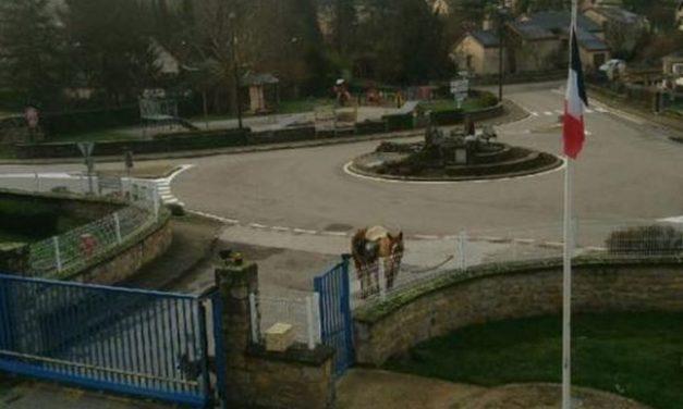 Lozère : un homme vient récupérer son permis de conduire à cheval
